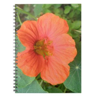 Cuaderno anaranjado de la flor de la capuchina