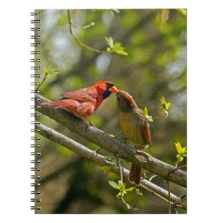 Cuaderno, besando a cardenales libros de apuntes