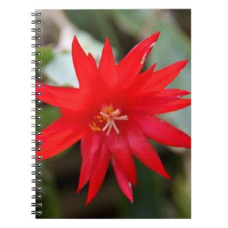 Cuaderno - cactus de pascua