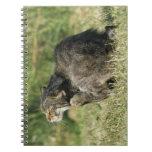 Cuaderno Cat5