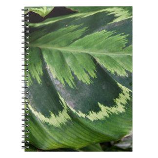 Cuaderno color de rosa de Calathea