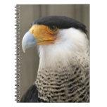 Cuaderno con cresta de la foto del pájaro del Cara