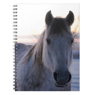 Cuaderno cuarto del caballo