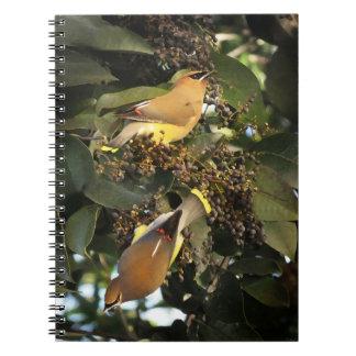 Cuaderno de Birding de los Waxwings de cedro