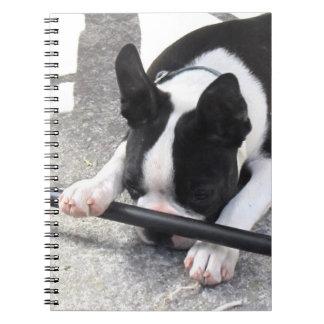Cuaderno de Boston Terrier
