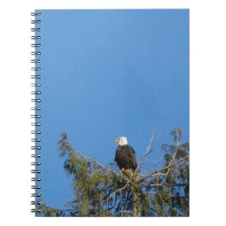 Cuaderno de Eagle calvo