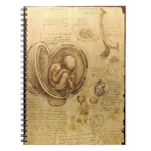Cuaderno de la anatomía del feto de da Vinci