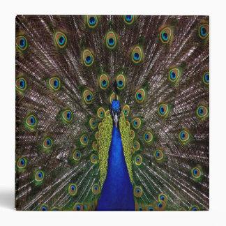 cuaderno de la carpeta del pavo real