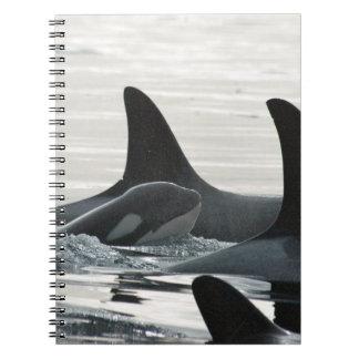 Cuaderno de la familia de la orca