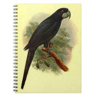 Cuaderno de la foto de Anadorhynchus Purpurascens