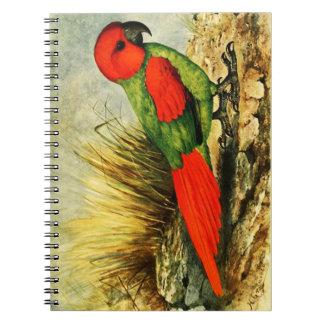 Cuaderno de la foto de Necropsittacus Borbonicus
