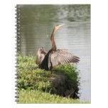 Cuaderno de la foto del pájaro del Anhinga