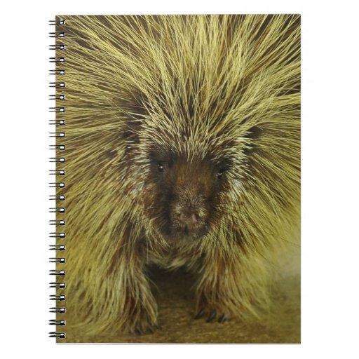 Cuaderno de la fotografía del puerco espín de Brow