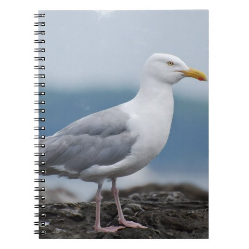 Cuaderno de la gaviota