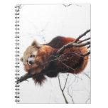 Cuaderno de la panda roja