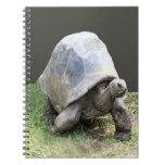 Cuaderno de la tortuga