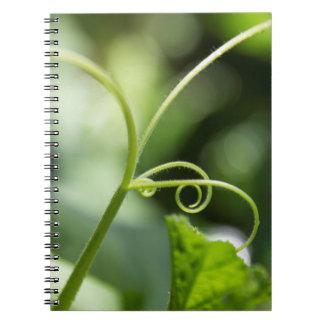 Cuaderno de la vid de calabaza