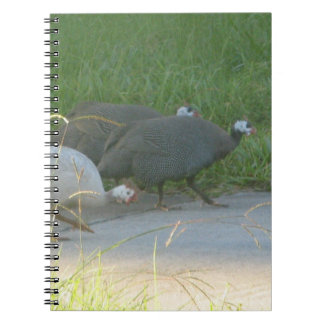 Cuaderno de las aves de Guinea
