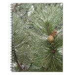 Cuaderno de los conos del pino Nevado