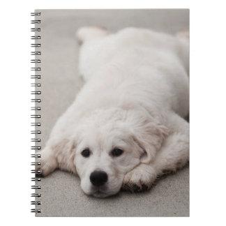 Cuaderno de notas del golden retriever