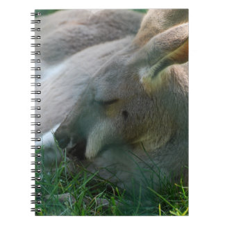 Cuaderno de relajación del canguro