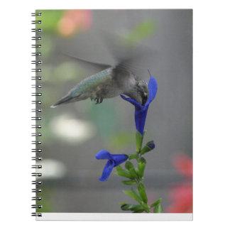 Cuaderno del azul del zafiro del salvia del pájaro