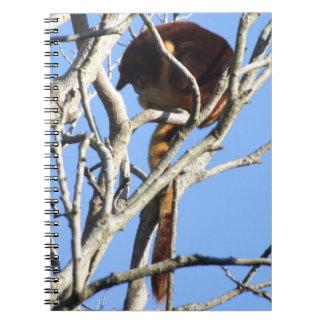Cuaderno del canguro de árbol