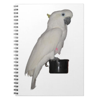 Cuaderno del Cockatoo