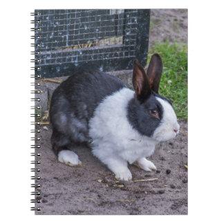 Cuaderno del conejo de conejito