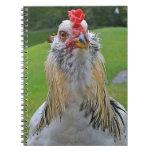Cuaderno del gallo