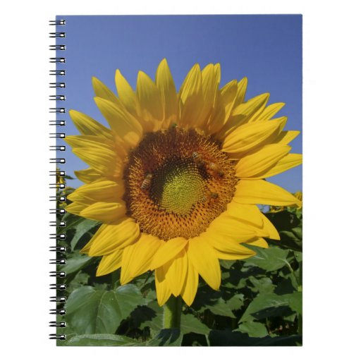Cuaderno del girasol