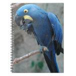 Cuaderno del Macaw del jacinto