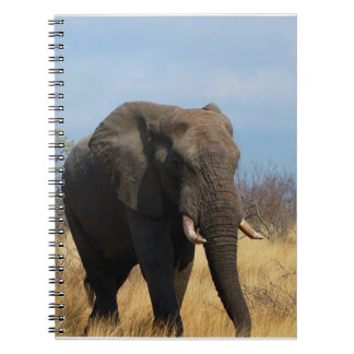 Cuaderno del Pachyderm