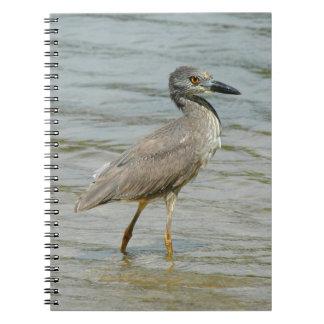 Cuaderno del pájaro de la garza de noche
