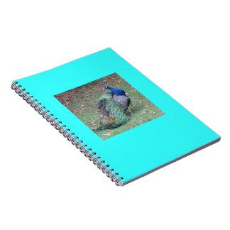 Cuaderno del pavo real