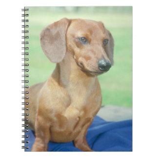 Cuaderno del perro del Dachshund