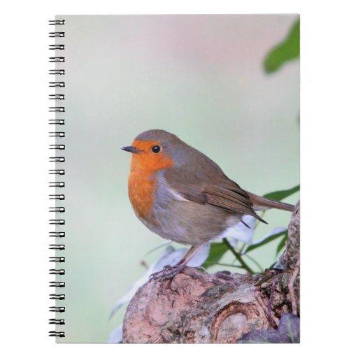Cuaderno del petirrojo