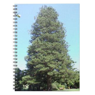 Cuaderno del pino de isla de Norfolk