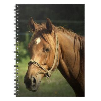Cuaderno del potro de la castaña