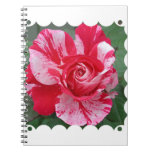 Cuaderno del rosa rojo y blanco