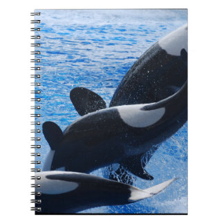 Cuaderno del trío de la orca