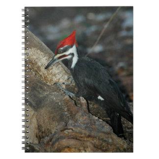Cuaderno dirigido rojo de la pulsación de corrient