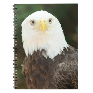 Cuaderno espiral calvo de la foto de Eagle