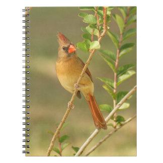 Cuaderno espiral cardinal femenino de la foto