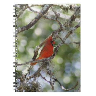 Cuaderno espiral cardinal masculino de la foto