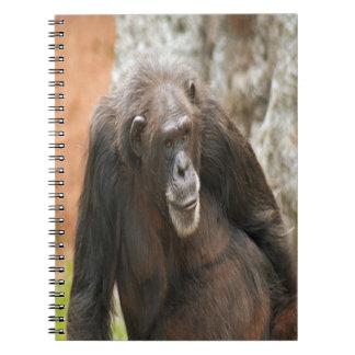Cuaderno espiral de la foto del chimpancé