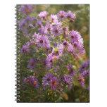 Cuaderno espiral del aster hermoso del otoño