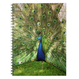 Cuaderno espiral del pavo real