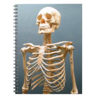 Cuaderno esquelético humano