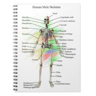 Cuaderno esquelético masculino humano